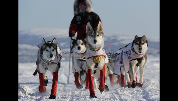 Quito, center, leads the team and Aliy Zirkle on the Yukon River.