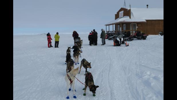 A dog team arrives in Safety.